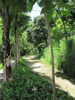1400 meter Private road to Villa Gamrang