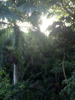 tropical landscaping on property