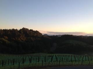 View across vineyard to sea