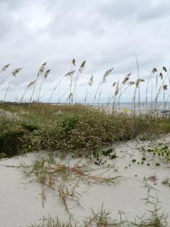 the dunes to the beach