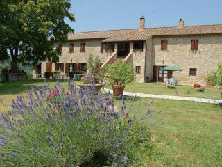 Agriturismo Podere Luchiano. Typical Umbrian count, Amelia