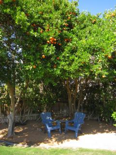 Seating area under the mini citrus grove