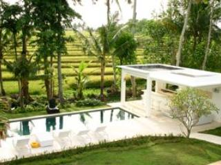 Contemporary Rice Paddy Villa