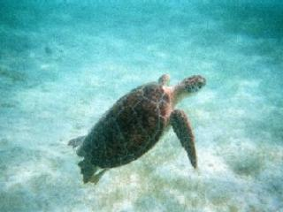 Awesome snorkeling at the Puerto Aventuras Beach