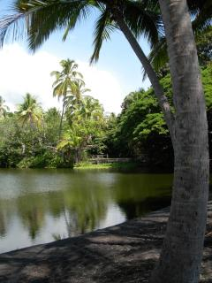 Pond at Punalu'u Black Sand Beach