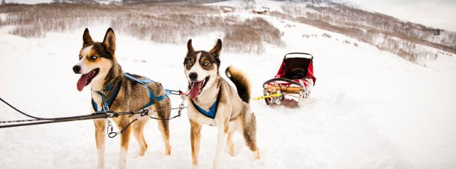 or dog sledding!  Both within minutes of Casa Blu!