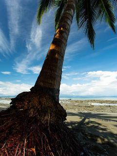 Beach palm.