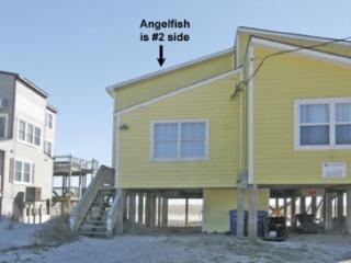 'Angelfish, North Topsail Beach