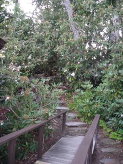 walkway to cabin