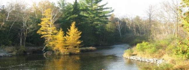 Enjoy a special hike to the Cedar River !