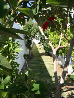 Private garden fruit trees