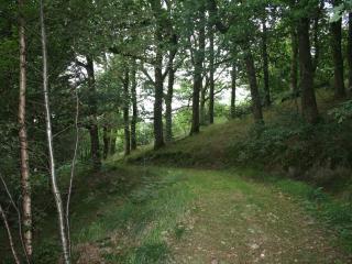 Glyngynwydd
