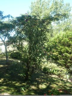 Wonderful secret garden