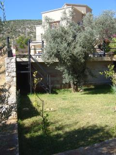 One of our gardens with one of the olive trees