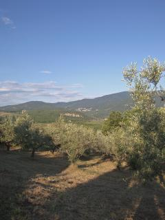 Panoramic views from olives fields