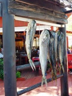 the daily catch at beach restaurant