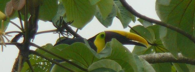 Tucan on the property