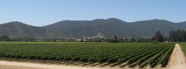 Explore the Chilean Wineries in the area