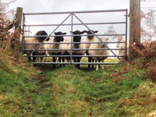 Welcome to our smallholding.