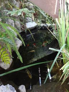 Koi Fish Awaiting your Visit