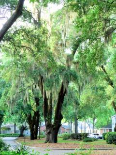 Beautiful, large oaks draped in Spanish moss greet you on Lake Frances Dr.