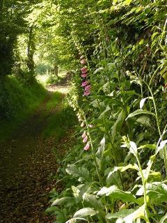 walk along the lane by Orchard Gites
