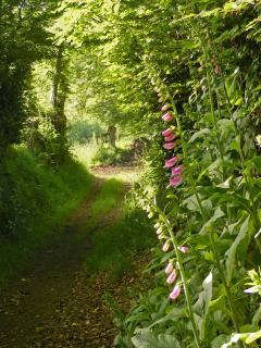 Take a walk along the lane by the B&B