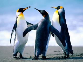 We also  have some penguins as pets!