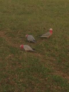 The prolific bird life on the property.