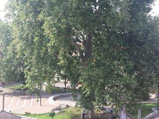 Veduta dal balcone - Beautiful tree, view from the balcony