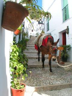 Friendly Frigiliana Donkey