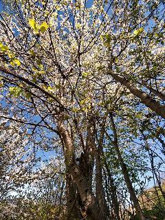 Primavera en tornafort