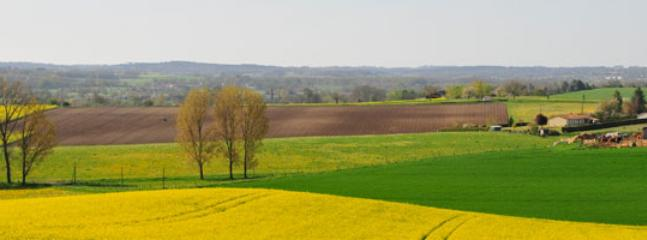 Countryside views, fields of sunflowers