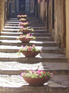 Via Caracciolo: nice street, very old, sometimes adorned with tipycal Sicilian flowers
