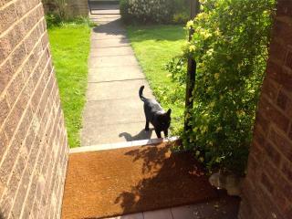 Teddie cat' meets concrete 'Freddie'