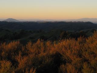 Afternoon sun looking towards Mt Kakepuku and Maungatautari.