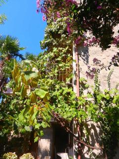le jardin et sa vigne