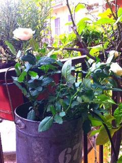 Fiori e erbe aromatiche sul balconcino