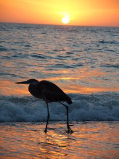 Bird on the beach at sunset