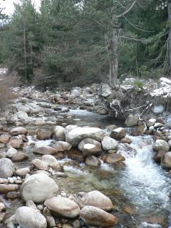 mountain stream summer