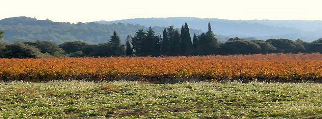 One of the many nearby vineyards in full Autumn colour.