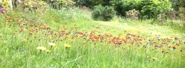 In Summer the lawn becomes a wild flower meadow.