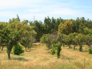 Quinta da Ortiga
