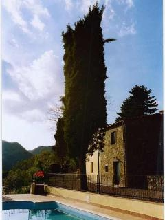 Old cypress at Corboli
