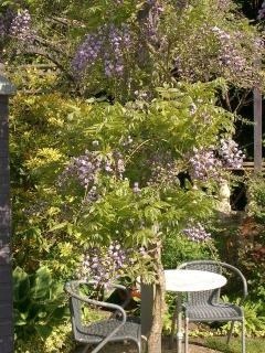Coffee corner under Wisteria in full bloom