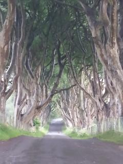 The Dark Hedges as featured in The Game of Thrones