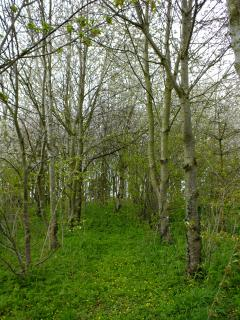 Woodland walk leading to a wildlife hide overlooking the old oast pond with a badger sett