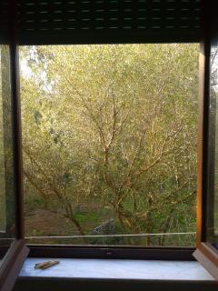 vista dalla finestra della cucina