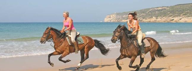 Horse ridding on the beach or have the horses brought to the farm