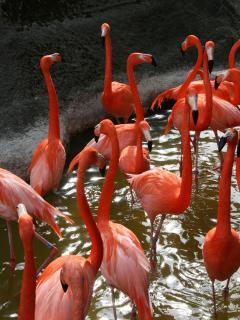 zoo de la Palmyre (60 km)